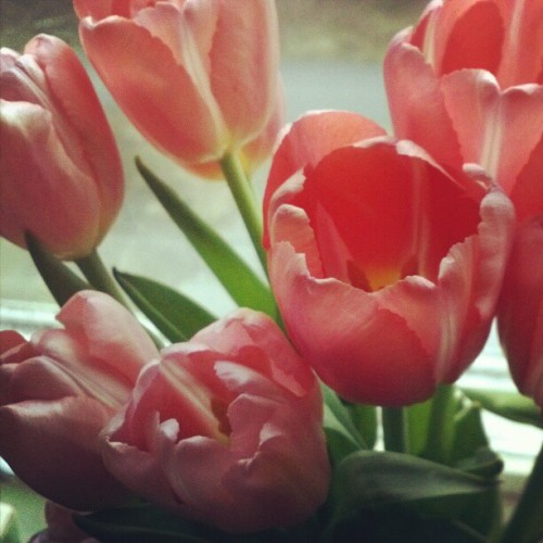 I want spring! #tulips #flowers (Taken with instagram)