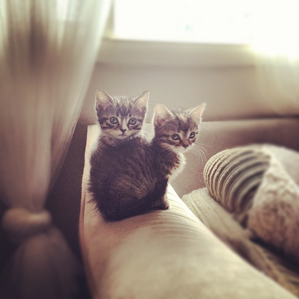 Two of a kind. #kittens #adorablecuteness