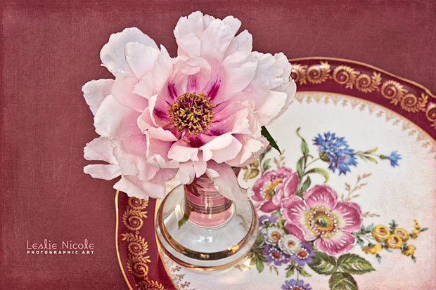 Tree peony from the garden with a vintage Limoges porcelain platter. Working on these new scratched overlay textures for French Kiss Collections.