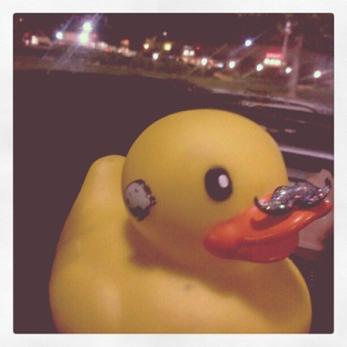Hello Ducky (Taken with instagram)