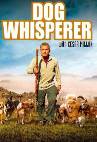 I am watching Dog Whisperer with Cesar Millan                                      Check-in to               Dog Whisperer with Cesar Millan on GetGlue.com