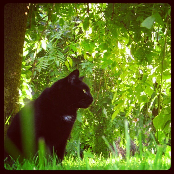 dannysmart:  #cat #garden #home #tree #leaves #green #summer #compactcanon220hs (Taken with instagram)