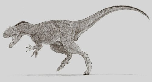 Allosaurus by ~Ahrkeath