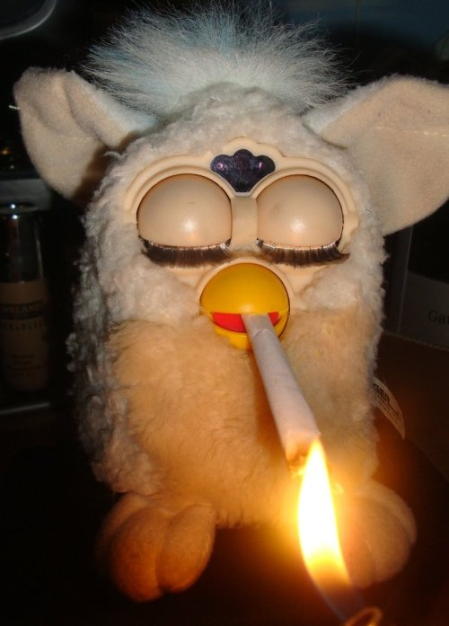 eccentriciity:  On 4/20 Ferbies even go hard…
