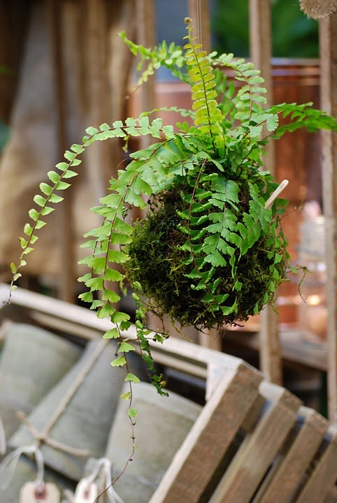 Kokedama - The ancient Japanese art of wrapping plants with moss instead of a pot.
