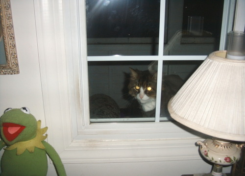 stop creeping in my window cat…