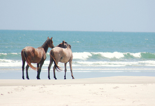 timber-wheels:  Wild Horses (Cumberland Island, Georgia) (by JAM Photography - By Justin A. Mercer)