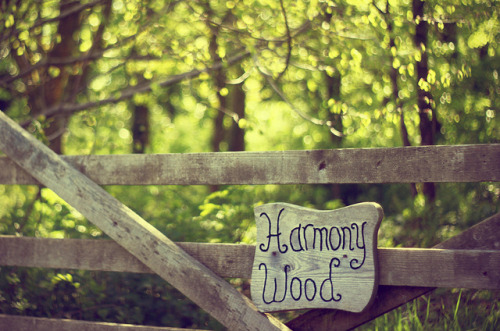 13-05-10 Harmony Wood by Βethan on Flickr.