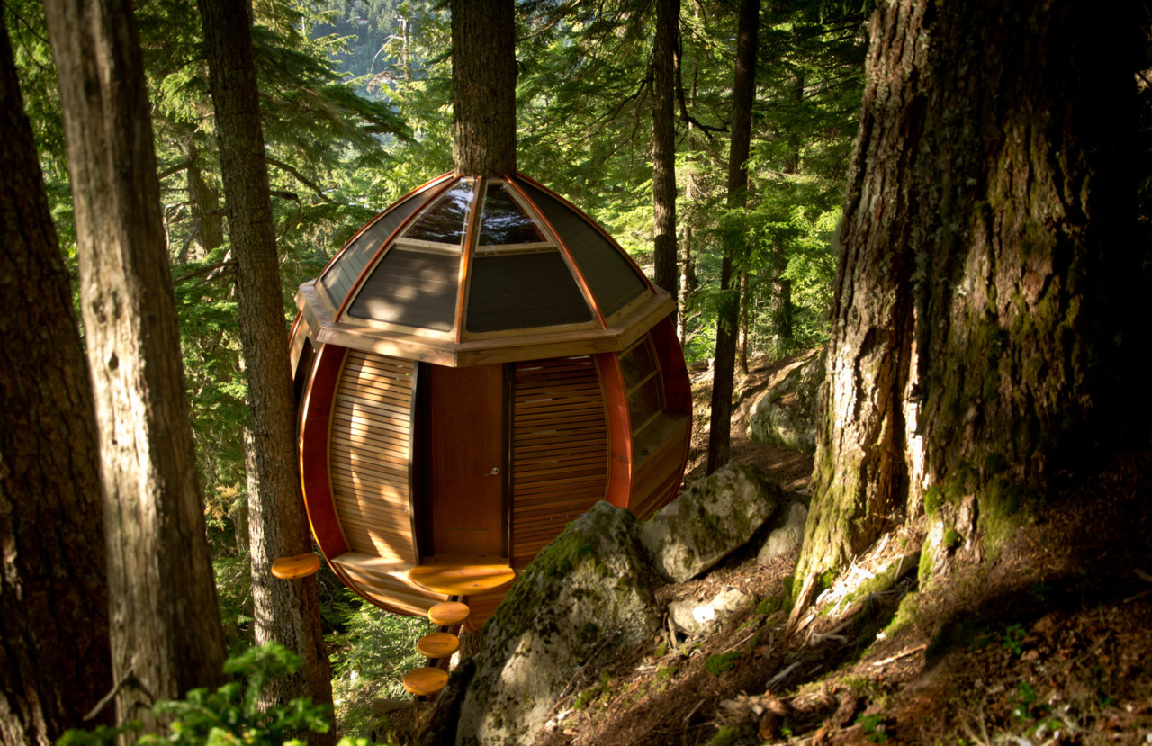 cabinporn:  A treehouse in the woods near Whistler, British Columbia, Canada. Submitted by Joel Allen.  I WANT TO GO.