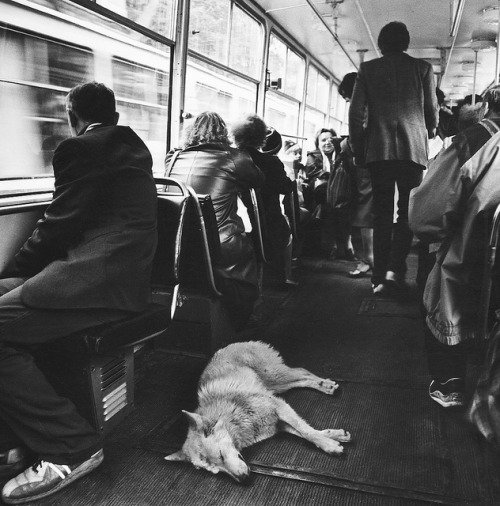 dog & people in the tram /St.Petersburg by bigcrow+ on Flickr.