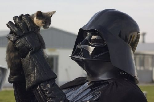 The force is strong with this…cat! #meow