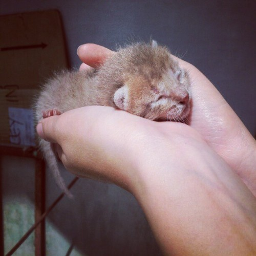 Something i saw the other morning. So cute! =) #cute #adorable #cat #kitten #animal #littleone (Taken with instagram)
