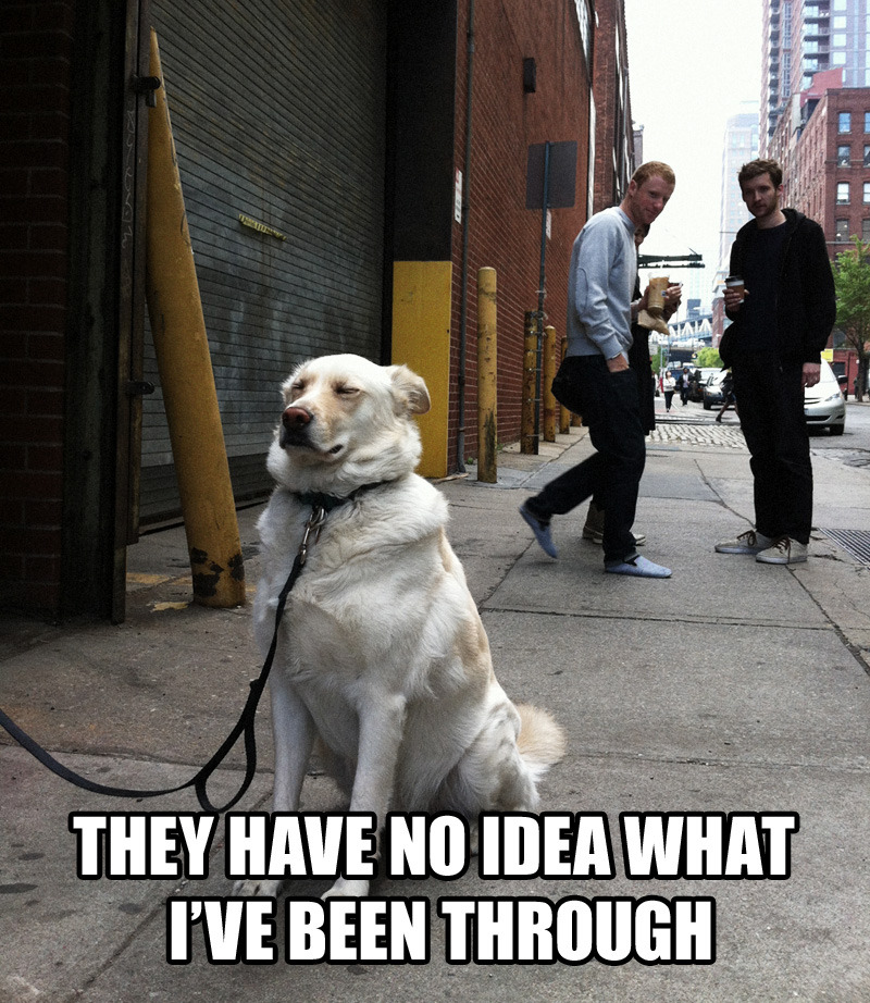 """I have no idea what I'm doing"" dog has had enough. feat. @JaySchaul @SirTomHayes"