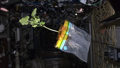 Space zucchini's life and times shared by astronautThe International Space Station's new mascot, a vegetable grown for research, has won the hearts of the crew and even has its own blog.