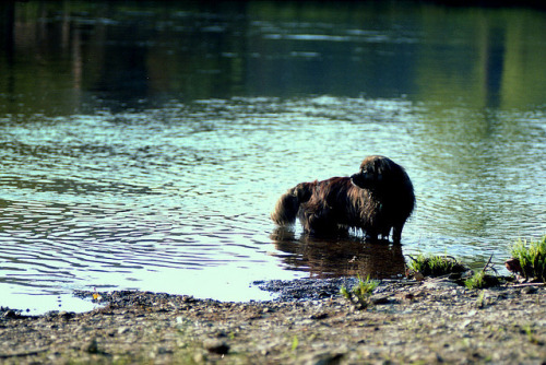 Dog in the Water, Everybody Drink on Flickr.Via Flickr: Camera: Nikon F3 Lens: Nikkor-Q Auto 1:3.5 f=13.5cm Film: Kodak Portra 160