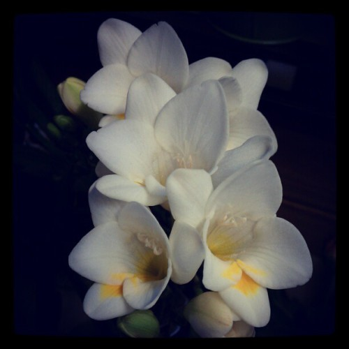 Sweet smelling freesia #lovely #flowers  (Taken with instagram)