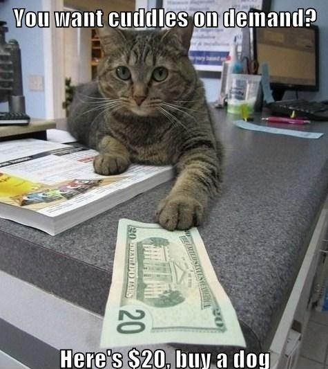 poyzn:  Buy a dog  Damn cats…