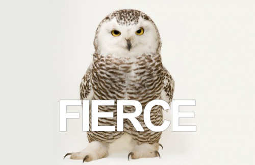 jtotheizzoe:  imwithkanye:  This young snowy owl is fierce! Check out more photos taken by Joel Sartore for The Biodiversity Project, which is documenting all the Earth's creatures threatened with extinction.  This is an amazing project. Everyone should tour through the library of images. Problems are much easier to fix when we are forced to look at them. Also, I want to caption like a hundred of these.