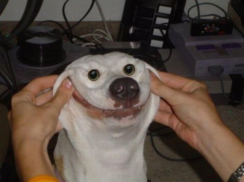 Human Forces Dog to Smile   Turn that frown upside-down. Here, I'll help you.