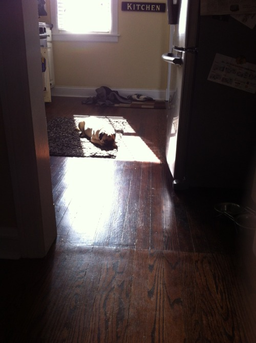 just gettin some sun. submitted by Kat Kusner
