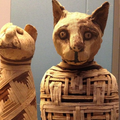 yourmonkeycalled:  Kitty Cat Mummies at the British Museum, London  I guess I'll go to London, ok.