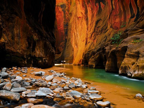 Zion's sandstone cliffs—in hues of creams, pinks, and reds—reveal clues to the geologic events that were important in shaping this national park, the first established in Utah.