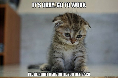 tastefullyoffensive:  Sad Kitten I'm never working again. ;~;