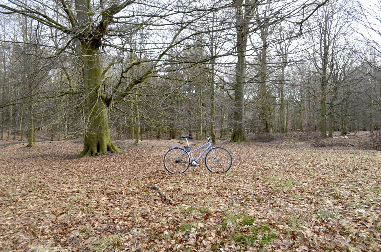 Bicycle and nature. Farum, Denmark Photo: Jadiel Galicia