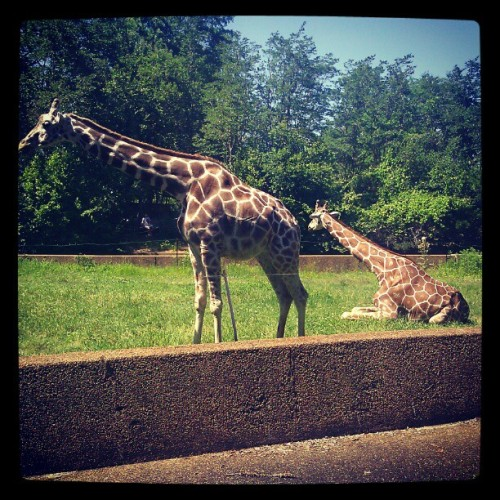 Just another day in Jafrica. #jackson #MISSISSIPPI #zoo #zoobrew is tomorrow get ya tickets! (Taken with instagram)