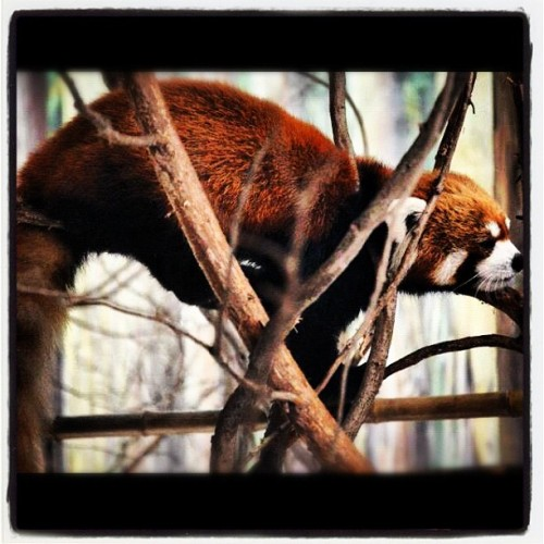 One of the many photos from the Houston zoo  (Taken with instagram)