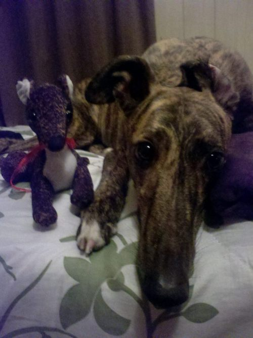 Ginny with her mini-greyhound. Submitted by doctoryvictory