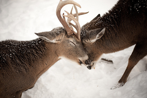 theanimalblog:  (by aaron thompson)