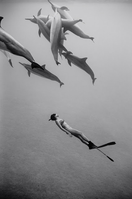 ruineshumaines:  Girl swimming with dolphins | Murray Mitchell