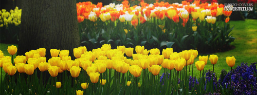 Huge Flower Garden Facebook Cover