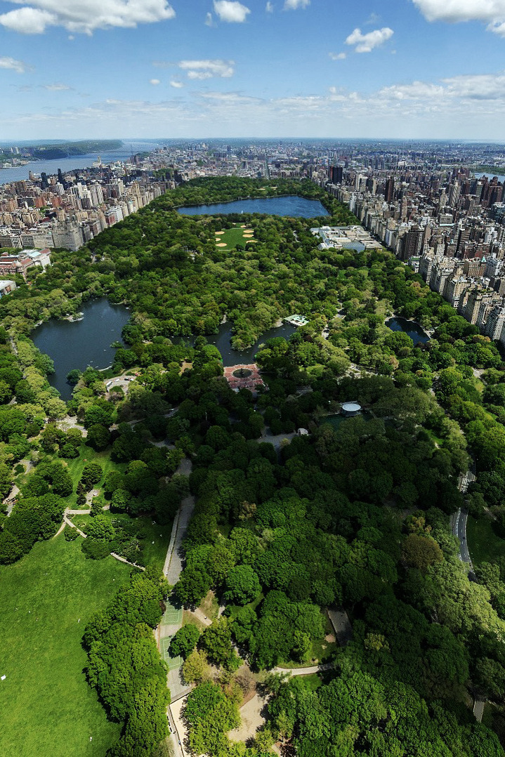 andrewbreitel:  Central Park New York, New York