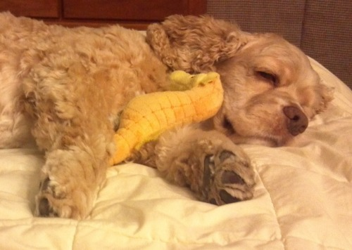 Buddy snoozing with his seahorse! Submitted by thepursuit