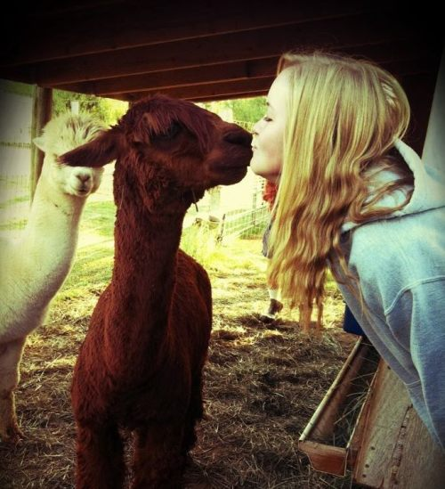 diego the kissing llama ;)