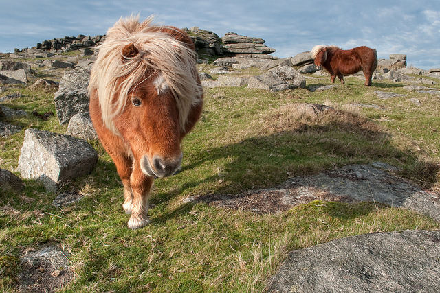 Incoming Pony by DartmoorGiant on Flickr.