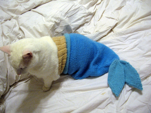 cyanidegrrrl:  it's a catfish  I just died… from cuteness overload.