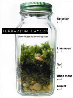 cajunmama:  (via Spice Jar Terrriums @Craftzine.com blog)