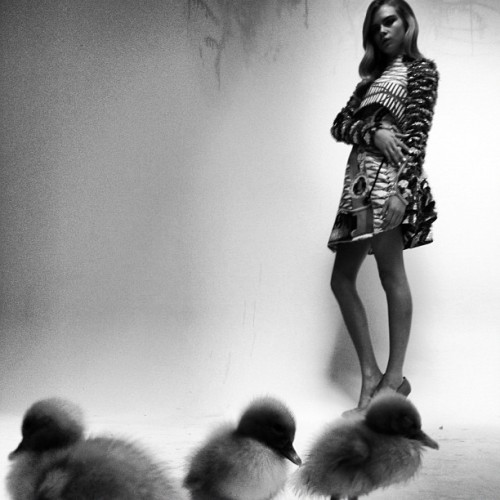 loving Nick Knight's live Instagram/Tumblr fashion shoot, with Cara Delevingne and ducklings, kittens, puppies… very cool use of technology. she is the aristocratic, springtime Lana Del Rey.but is it New Aesthetic? showstudio:  Ducklings, with dress by Mary Katrantzou and jewellery by Van Cleef and Arpels (Taken with instagram)