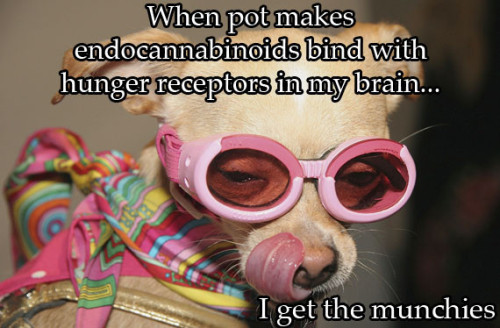 Facts about marijuana presented by dogs who look high