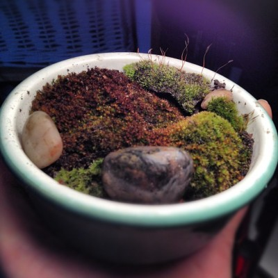 My first moss garden inspired by The Clorofilas (Taken with instagram)