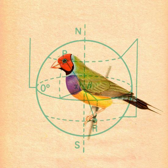 Old animal illustrations   geometric diagrams = Kacie Mills. (via Kacie Mills. « Present&Correct)
