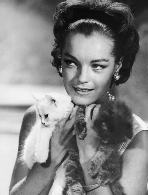 hautecatture:  Romy Schneider with kitties, 1960s