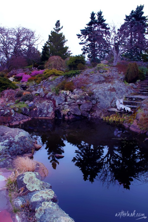 Abkhazi Garden in Victoria, BC Photo by Cassie @ antlerlash.com