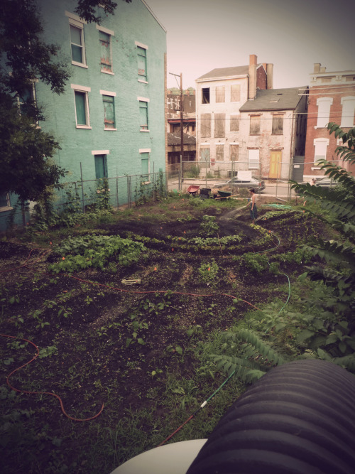 knowurbanis:  COMMUNITY GARDEN // THE RE-BIRTH OF A NEIGHBORHOOD