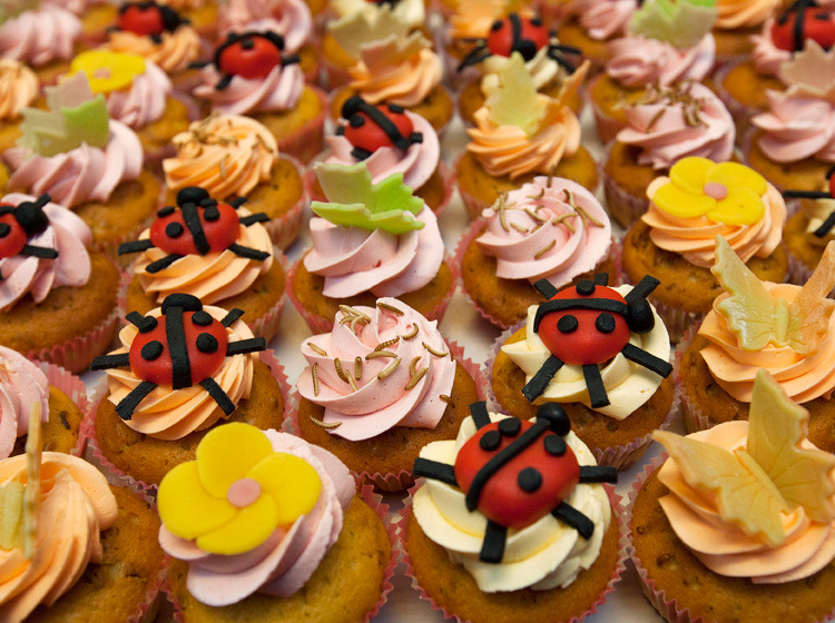 Wageningen U., in the Netherlands, lays out a spread of cupcakes made of insects. Scientists at the university showed that insects could provide the best source of protein to meet the needs of a rising population. (Photograph: Michael Kooren, Reuters, Landov)