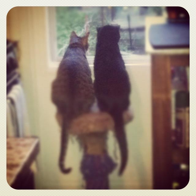 newsweek:  Just two bros, watching the birds.