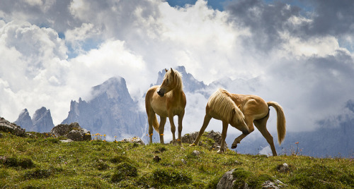 sonycatnina:  Dolomite Horses by Kevin.Grace on Flickr.